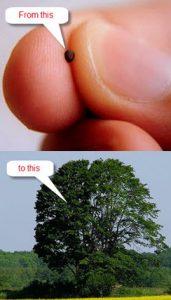 Mustard Seed to an Oak Tree